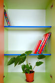 Bookcase with books and a plant — Stock Photo