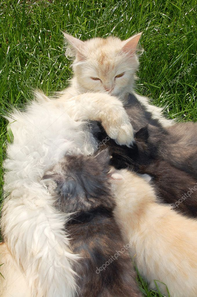 Mother cat with her 4 kittens in the grass — Stock Photo #1006339