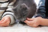 Children feeding a cat — Stock Photo