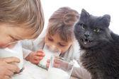 Children and cat drinking milk — Stock Photo
