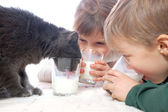 Kids and cat drinking milk together — Stock Photo