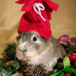 Royalty-Free Stock Photo: Funny Cavia on the christmas garland as