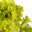 Fresh raw lettuce with water drops. This - Stock Photo
