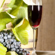 Old red wine in glass with vine and grap — Stock Photo