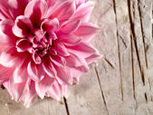 Beautiful lotus flower on the old desk — Stock Photo