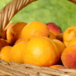 Fresh juicy apricots in the basket — Stock Photo