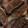 Coffee bean in deep shadows - Stock Photo