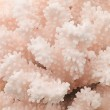 Pink coral texture — Stock Photo