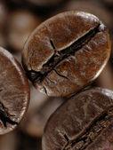Coffee bean in deep shadows — Stock Photo