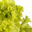 Royalty-Free Stock Photo: Fresh raw lettuce with water drops. This