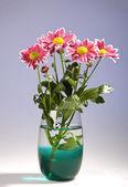 Chrysantemum bouquet — Stock Photo