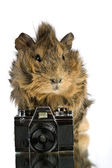 Funny shaggy photographer. — Stock Photo