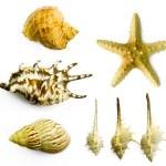 Seashell — Stock Photo #1018390