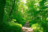 森林 — 图库照片