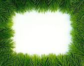 Fresh green — Stock Photo