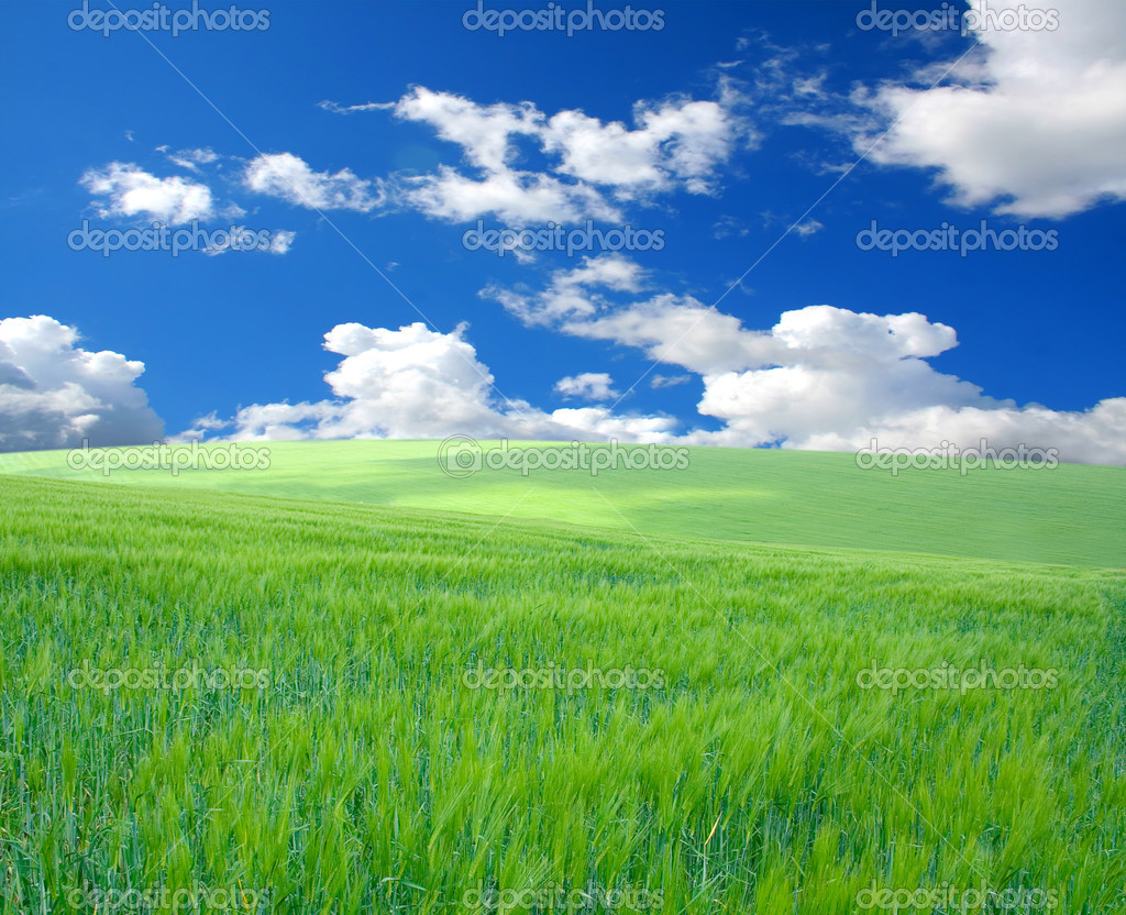 Vhery mach green grass under blue sky — Stock Photo #1013660