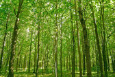 Forest — Foto Stock