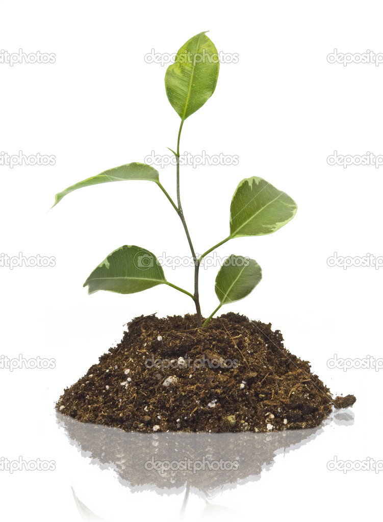 Young plant on the white backgrounds — Stock Photo #2046346