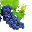 Fresh grape cluster with green leafs - Stock Photo