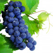 Fresh grape cluster with green leafs — Stock Photo #1013904