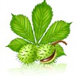 Royalty-Free Stock Imagem Vetorial: Chestnut seed fruits with green leaf iso