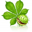 Royalty-Free Stock Imagen vectorial: Chestnut seed fruit with green leaf isol