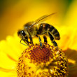 Bee on flower — Stockfoto