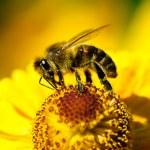 Biene auf Blume — Stockfoto