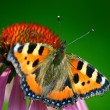 Stock Photo: Butterfly sits on flower