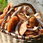 Big basket full of mushrooms — Stock Photo #1013193