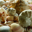Sea shells and pebble beach — Stock Photo #1013727