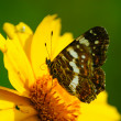 Butterfly sits on a flower — Foto de Stock