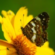 图库照片: Butterfly sits on flower