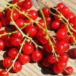 A lot of berries of red currant — Stock Photo