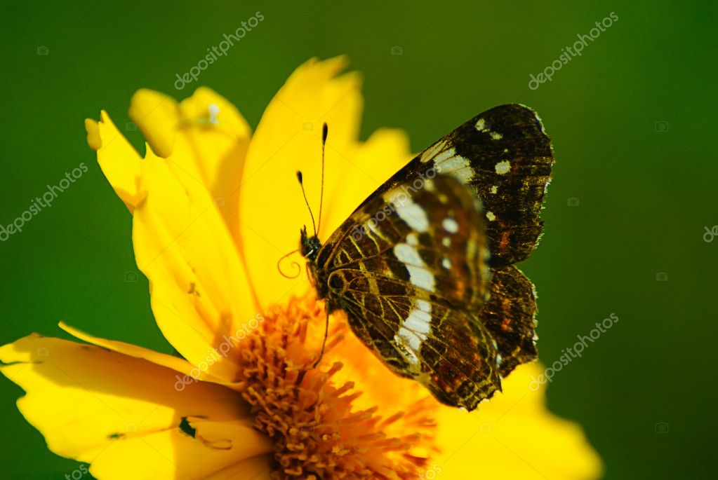 Orange butterfly sits on a flower in summer — Stock Photo #1013831