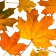 Leaves on autumn, — Stock Photo