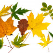 Leaves on autumn — Stock Photo