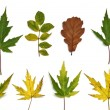 Stock Photo: Leaves on autumn,