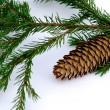 Branch fir-tree with pinecone — Stock Photo
