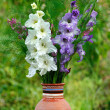 Gladiolus in vase — Stock Photo