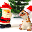 Santa Claus and tiger and christmas — Stock Photo