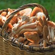 Royalty-Free Stock Photo: Basket full of mushrooms on a grass