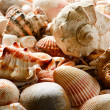 Sea shells and pebble beach — Stock Photo