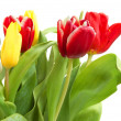 Royalty-Free Stock Photo: Colored tulips