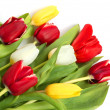 Colored tulips - Stock Photo