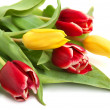 Colored tulips — Stock Photo #1019419