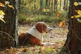 Cão a descansar — Foto Stock