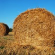 Hay bales — Stock Photo