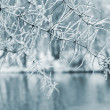 Royalty-Free Stock Photo: Ice on tree