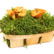 Chanterelles in a basket — Stock Photo